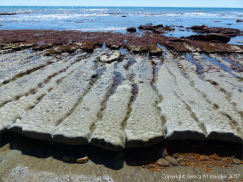 Coastal mudstone layers eroding into long fingers of rock separated by narrow sinuous channels