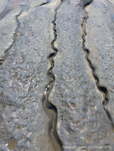 Sinuous channels being eroded in intertidal rock layers