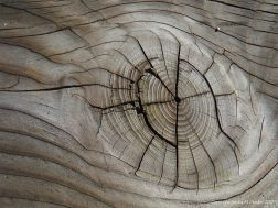 A natural wood knot in cut timber