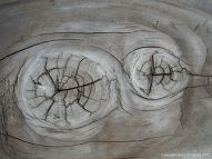 Natural wood knots in cut timber