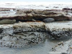 Holes in rock made by piddocks