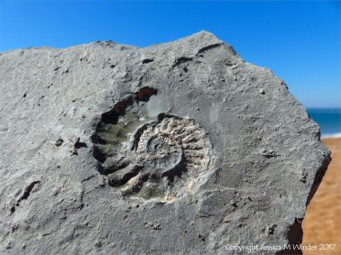 Ammonite fossil on Seatown Beach