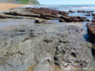 Intertidal rocks with holes made by burrowing bivalves called piddocks contributes to coastal erosion processes.