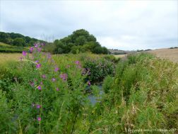 River bank vegetation in the Dorset countryside