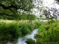 Thickly vegetated river banks along the Cerne in mid July