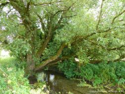 Beneath the willow tree that overhangs the river