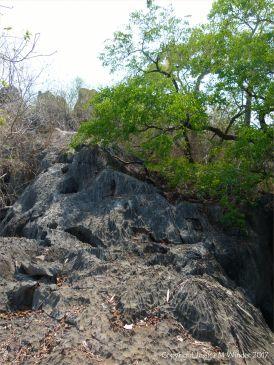 Rillenkarren erosion in the karst landscape near Chillagoe in the Queensland outback at Chillagoe.