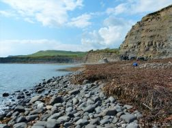 Kimmeridge Bay with seaweed strandline