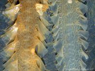 Kelp seaweed textures and patterns in the strandline