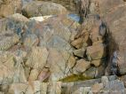 Igneous rock pattern and texture