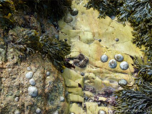 Contrasting rocks at Dogs Bay