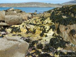 Contrasting rock types at Dogs Bay