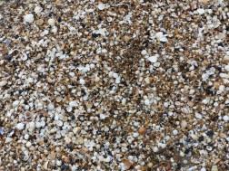 Seashells on the beach at Swansea Bay