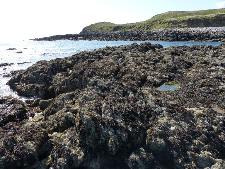 Dry seaweed on Spaniard Rocks
