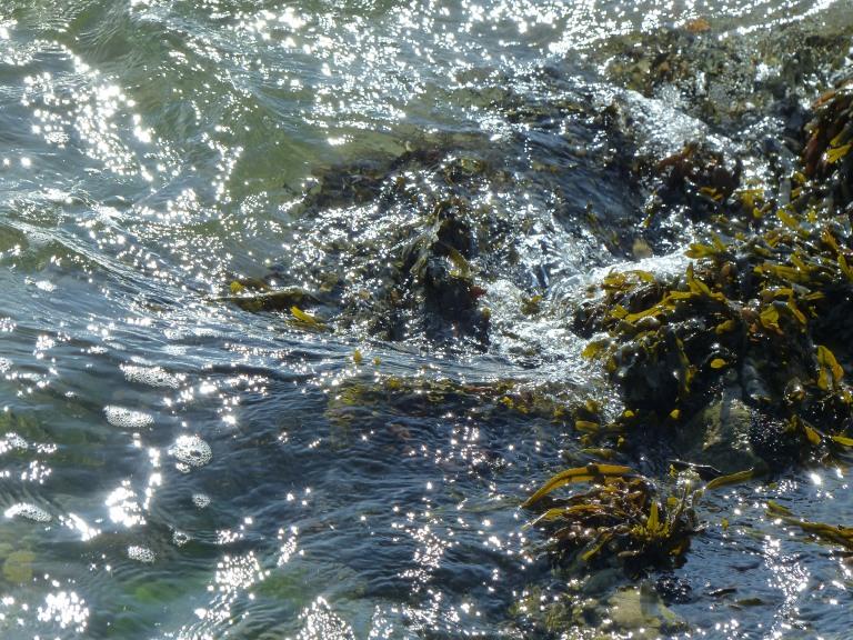 Sparkling waves splashing seaweeds on rocks