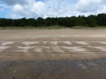 Shells drift lines on the beach