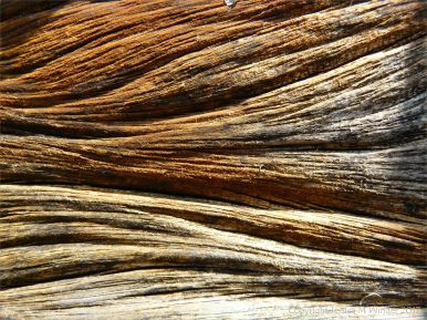 Macro shot of rust-stained woodgrain in a breakwater timber