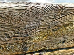 Curvilinear ridges and grooves in water-worn timber of an old breakwater