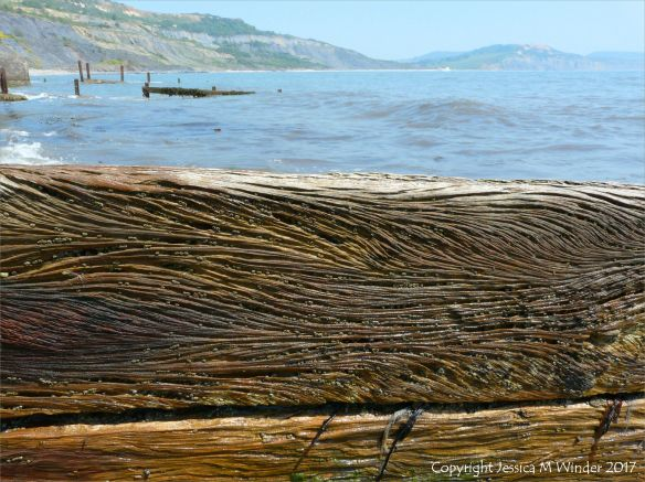 Curvilinear woodgrain patterns in old wooden breakwaters