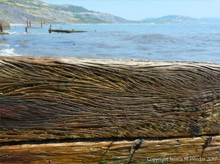 Curvilinear woodgrain patterns in old wooden breakwaters