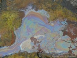 Rainbow-coloured bacterial film on the surface of iron-rich water