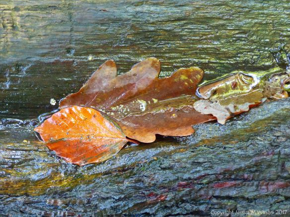 Wet dead leaves on tree bark