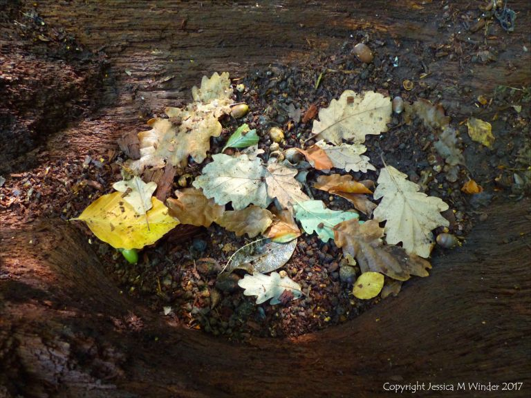 Autumn leaves, seeds and fruits lying on rotting timber