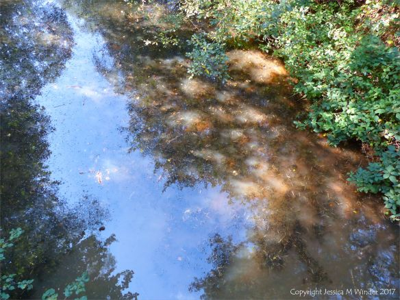 The shallow margin of a pond with cloudy water and reflections on a sunny autumn morning
