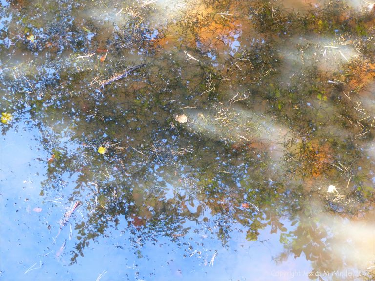 Reflections on the surface of a shallow pond of cloudy water in autumn