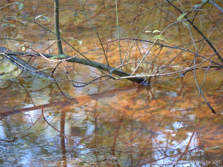 Shallow murky pond in early autumn