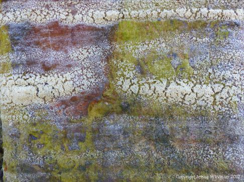 Dried sea foam on algae-coated rusty iron