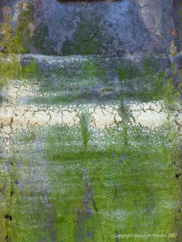 Dried sea foam on algae-coated rusty iron