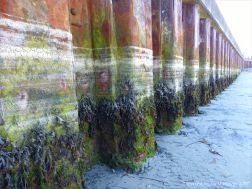Looking upshore at the rusty iron pier supports with lines of dried sea foam and attached seaweeds