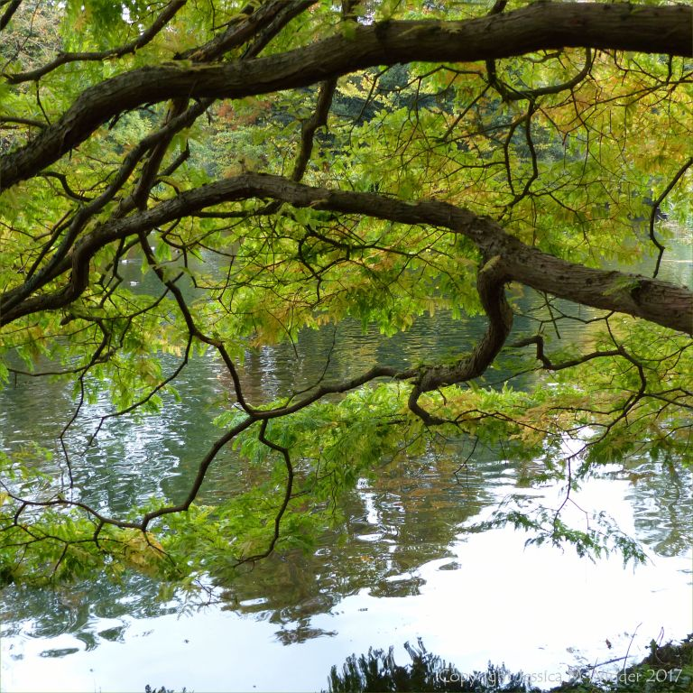 Lakeside view through the branches of a tree at Kew Gardens