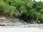 Context shot for location with rock texture and pattern at Cape Tribulation - meta-sedimentary rocks