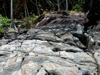 Rocks at Cape Tribulation 7