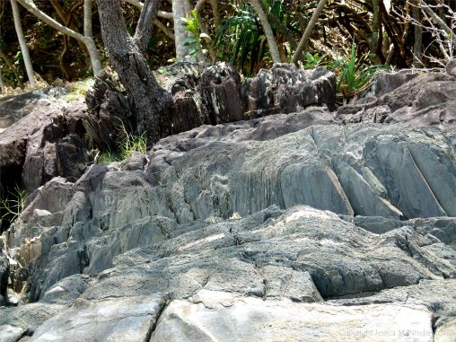 Rock texture and pattern at Cape Tribulation