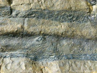 Rocks at Cape Tribulation 12