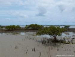 Context shot of beach habitat where sand pellet patterns were found