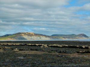 Seaweed beds at low tide in Lyme Regis, Dorset, UK.