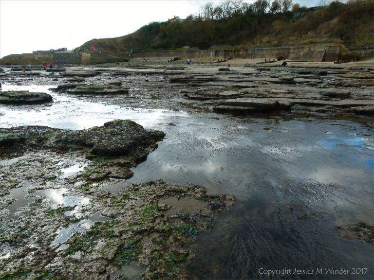 Seaweed-filled rock pools at Lyme Regis in Dorset, UK.