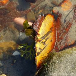 Piece of rusty painted metal in a pool with seaweed on the beach