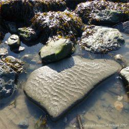 Fine sediment ripple pattern on a flat rock on the beach