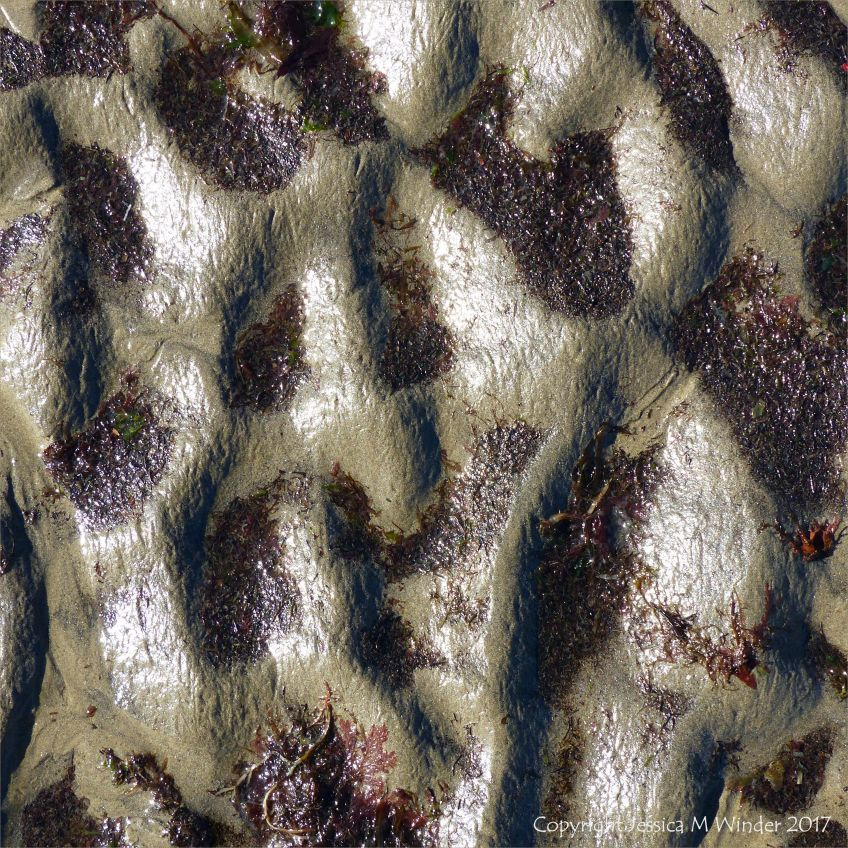 Ripple pattern in wet sand with fragments of red seaweed in the hollows