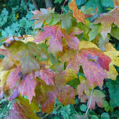 Leaves changing colour in autumn