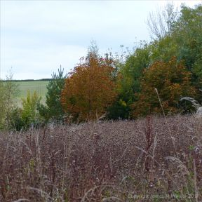 View across the meadow of dried grasses and seed heads to the countryside beyond