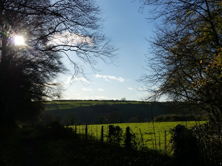 Strong light contrasts in the autumn countryside with views of sunlit fields from a shadowed tree-lined lane