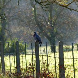 Strong light contrasts in the autumn countryside with bird on fence