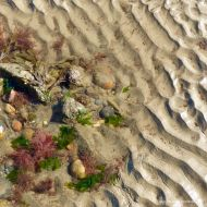Detail of the shore below the new sea wall at Lyme Regis in Dorset's Jurassic Coast with seaweed and sand ripples