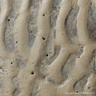 Sand ripples with holes made by piddocks in the underlying rocks